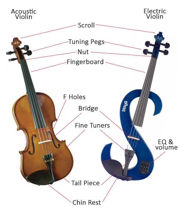 Anatomy of a Violin